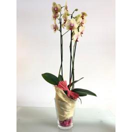 Orquídea Amarilla y Rosa en Vaso Cristal