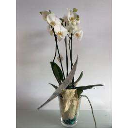 Orquídea blanca en Vaso Cristal