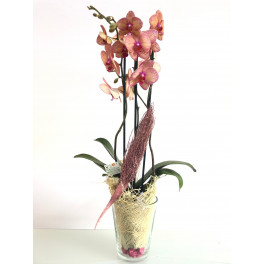 Orquídea Rosa y Amarilla en Vaso Cristal