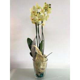 Orquídea Verde en Vaso Cristal